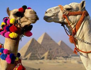 Туры в Египет из Гомеля